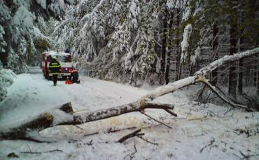 Odstranění rozlomených a vyvrácených stromů
